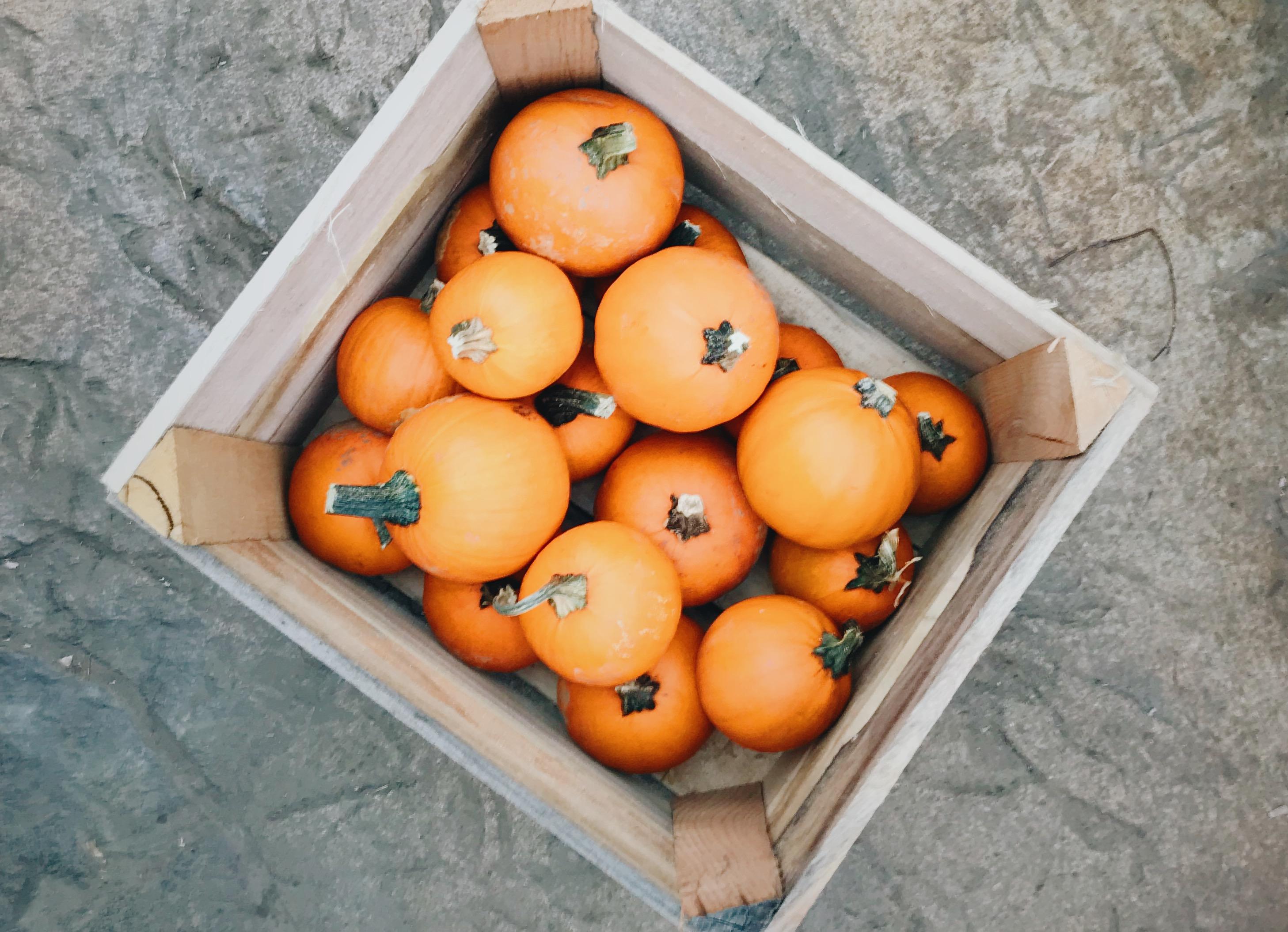 pumpkin patch king of prussia pa