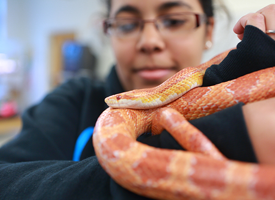 A Cabrini student holding a snake